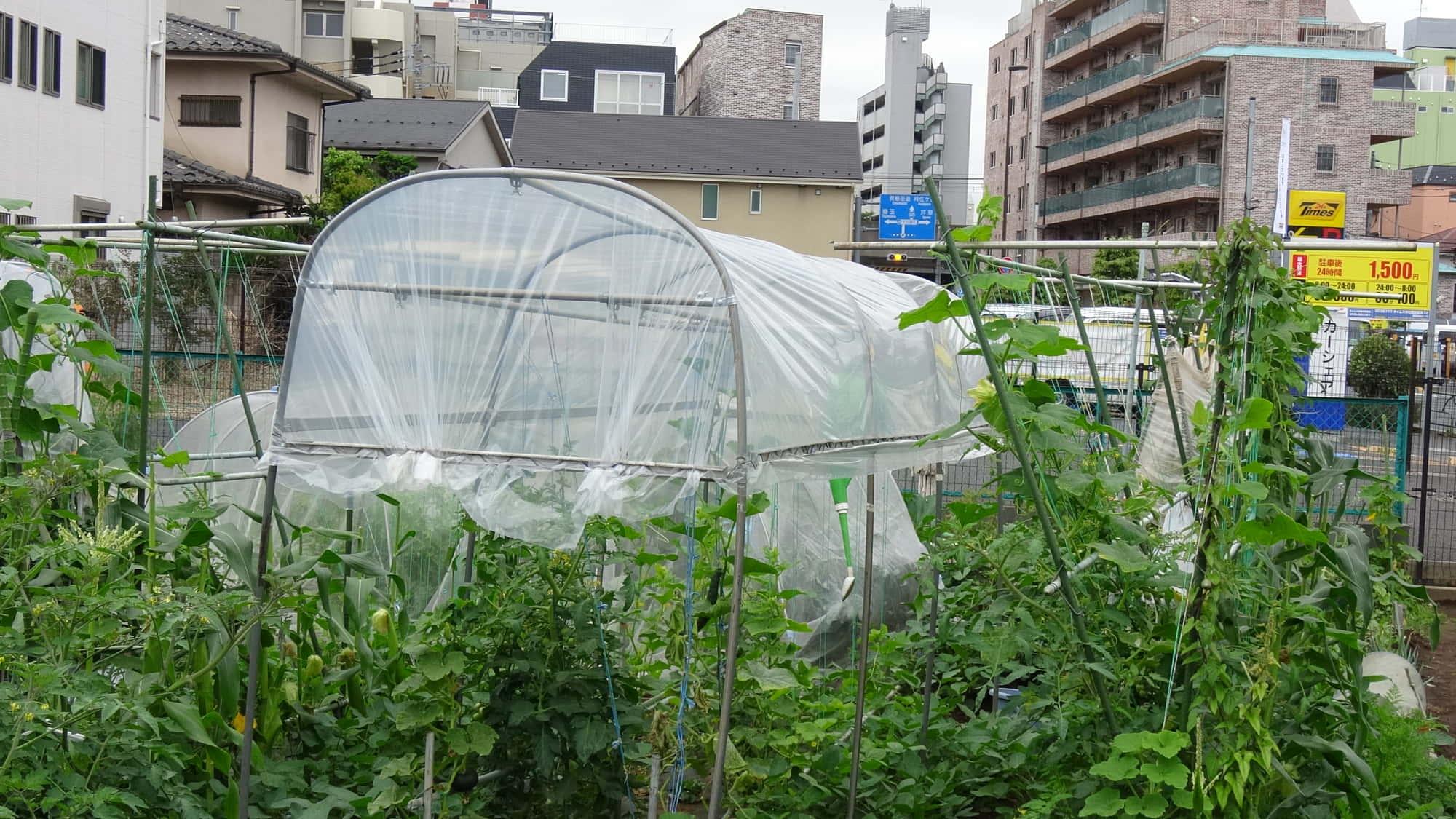 トマト菜園のハウス