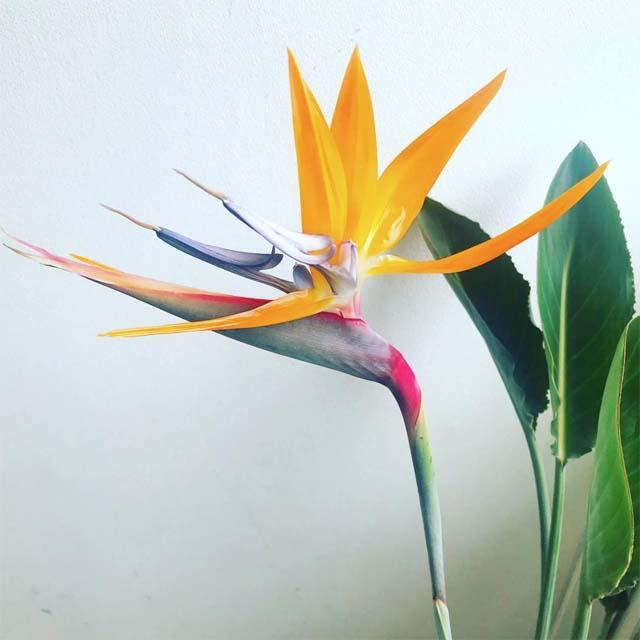 ストレリチアレギナエ花