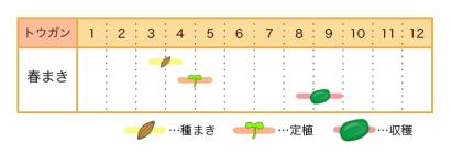 トウガンの栽培カレンダー - 種まき・定植・収穫