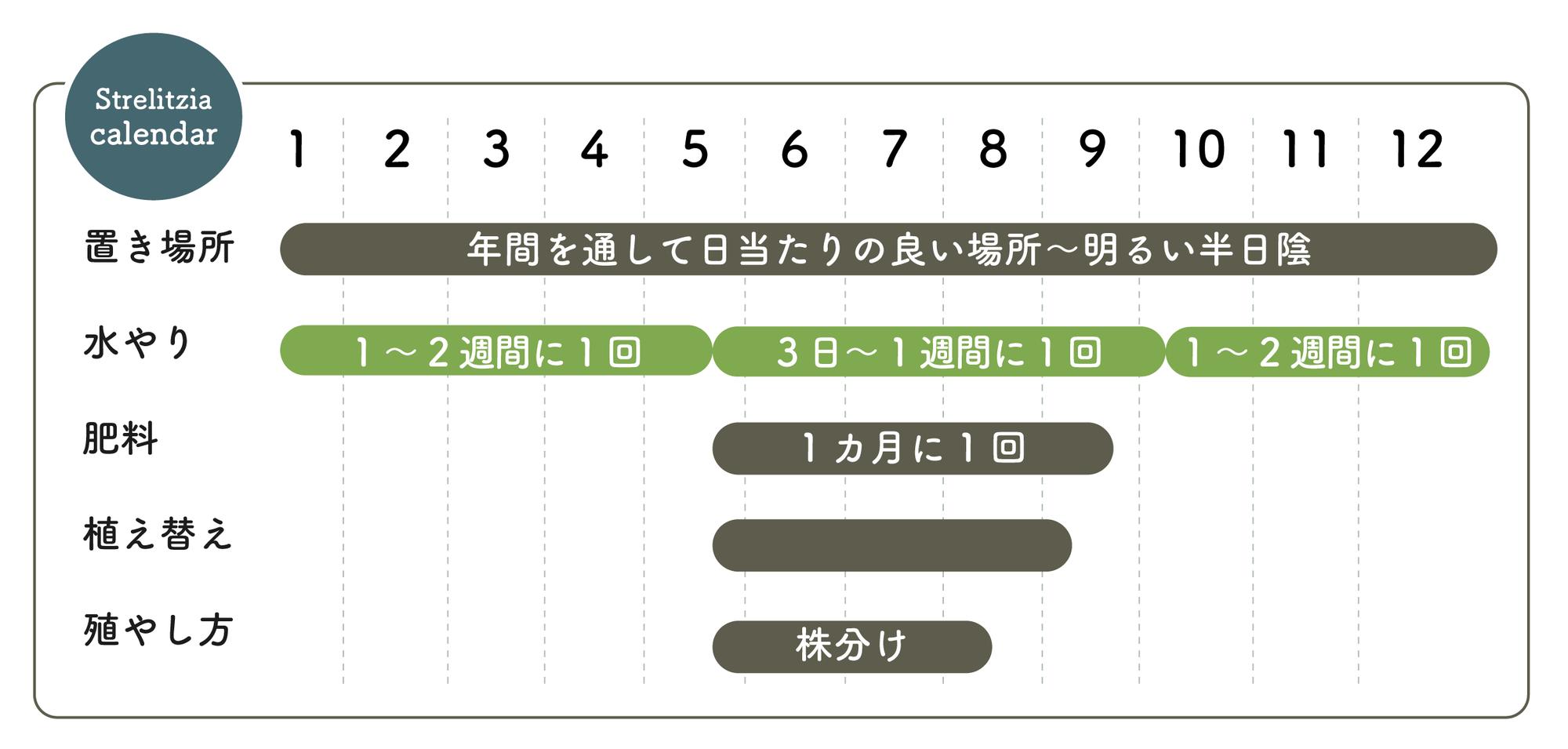 ストレリチアの栽培カレンダー