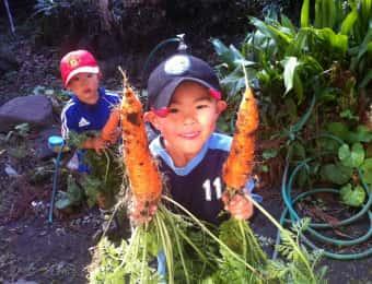 ニンジンの収穫をする子ども