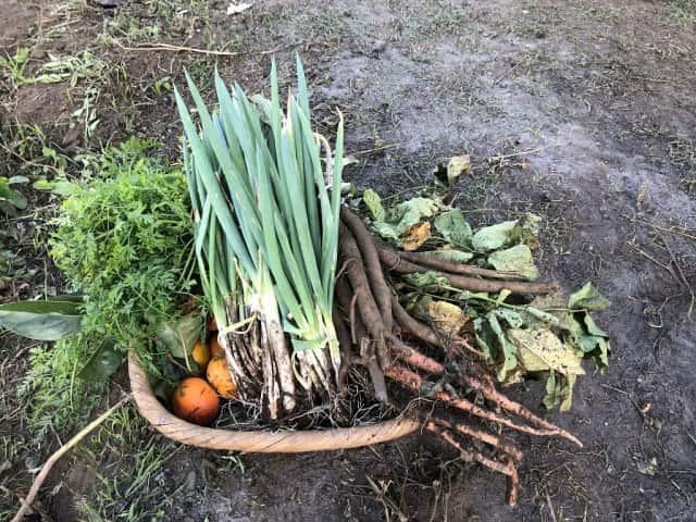 収穫したネギや根菜など
