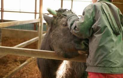 川瀬牧場の娘さんと牛