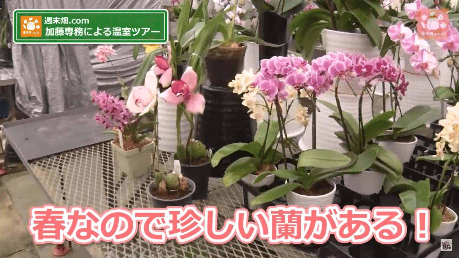 洋ラン温室ツアーの動画