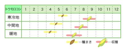 トウモロコシ 新規就農レッスン 栽培カレンダー