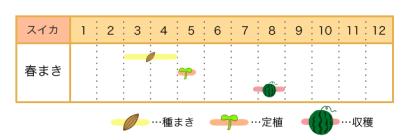 スイカの栽培カレンダー - 種まき・定植・収穫