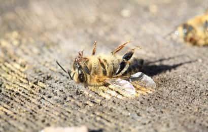 農薬 蜂 事故