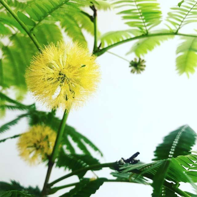 エバーフレッシュの花