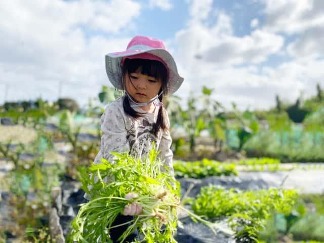 水菜を収穫する女の子
