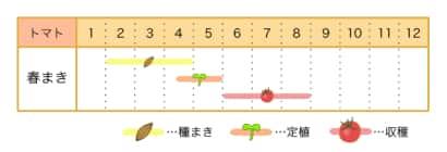 トマト栽培カレンダー