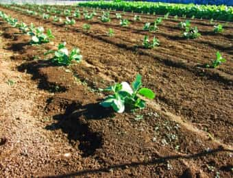 畑、露地栽培、農薬散布