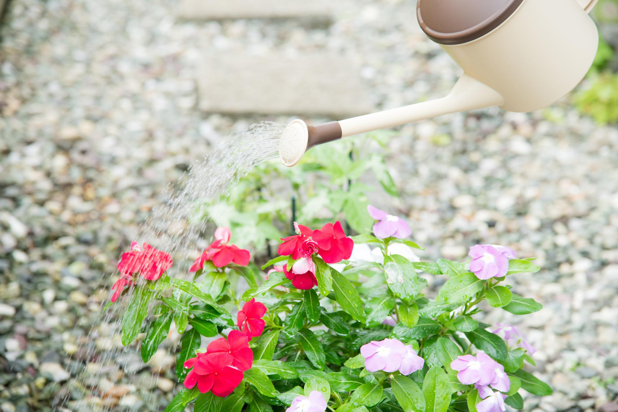 花の水やり