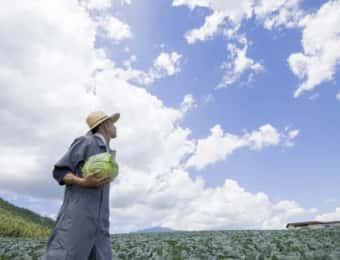 キャベツ畑の男性