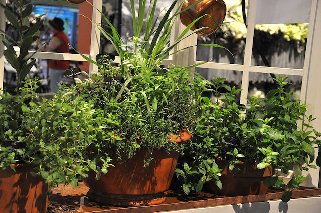 ローリングストックを目指した窓際で野菜やハーブを育てる家庭菜園