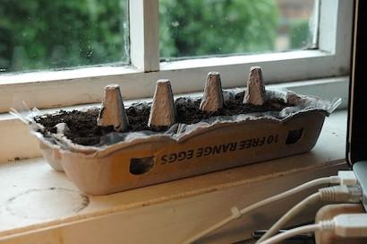 窓辺の家庭菜園で卵パックに土を入れ、種まきをしたところ