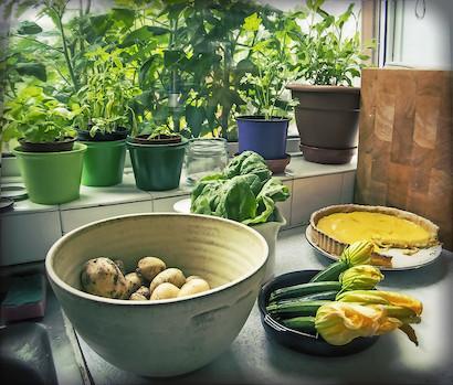窓辺で栽培中のハーブやベランダや畑で育てた野菜を使って料理