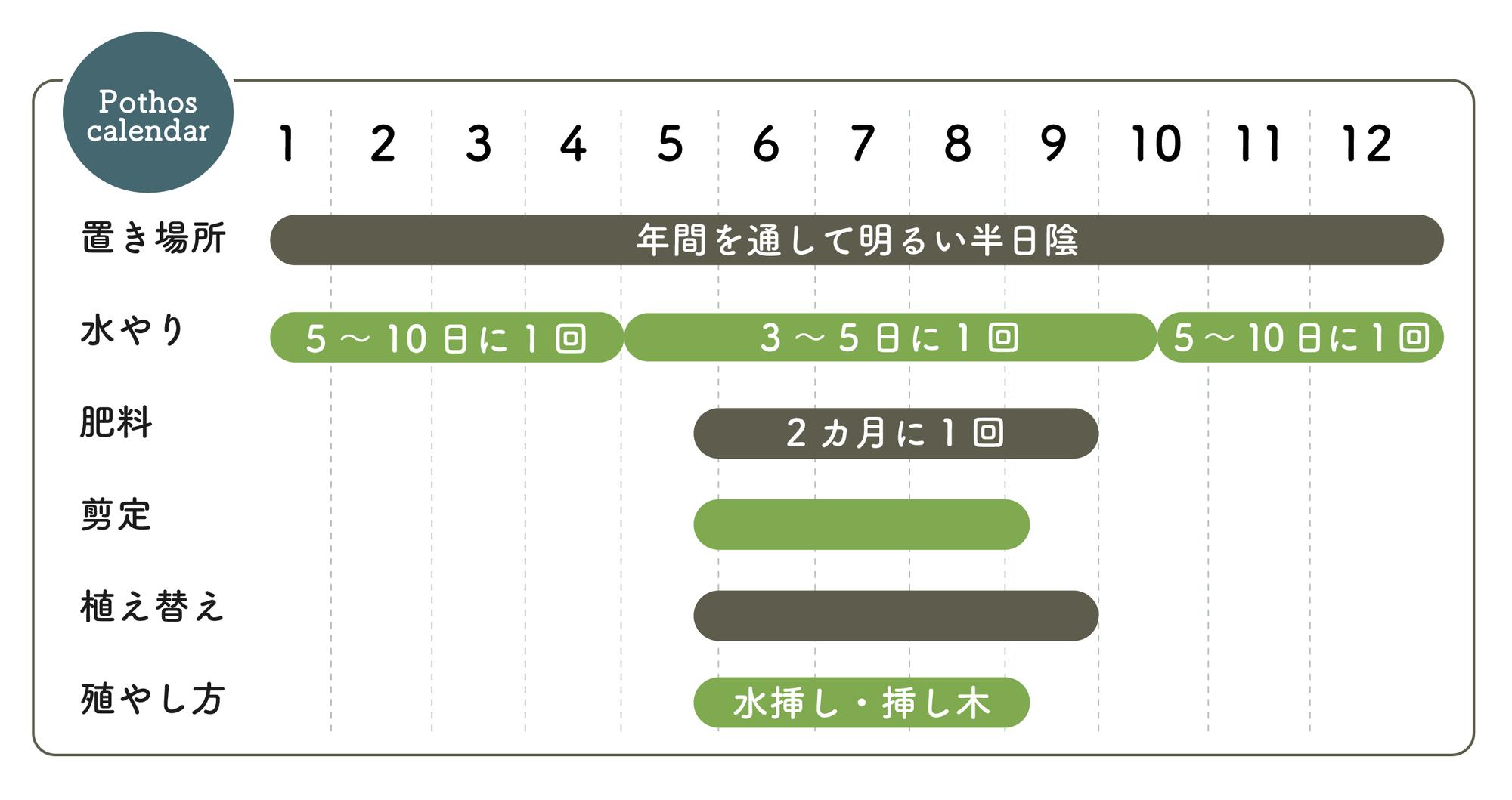 ポトスの栽培カレンダー