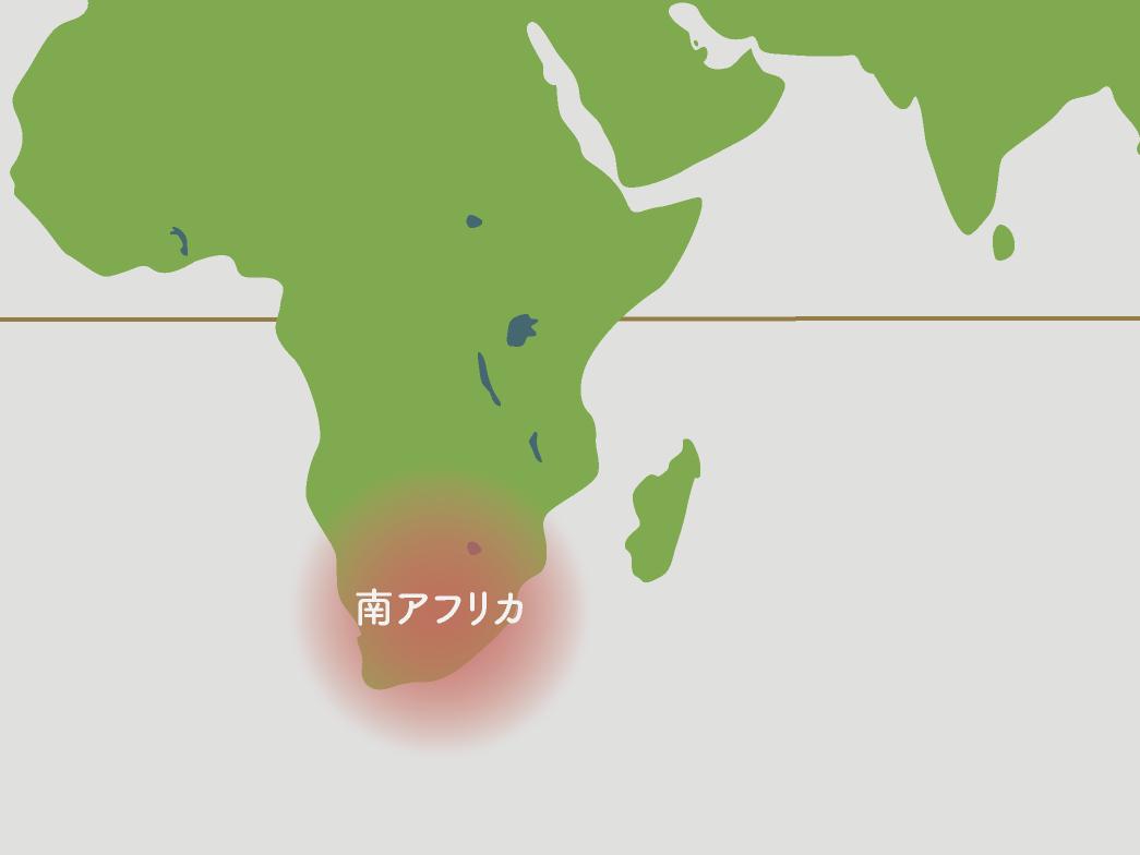 ハオルチア原産地地図