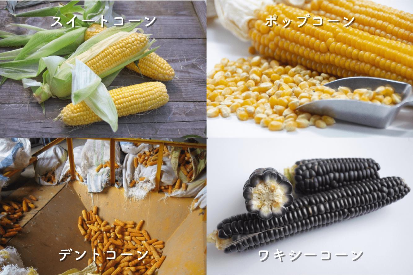 トウモロコシの種類