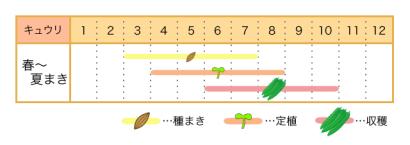 家庭菜園カレンダー キュウリ