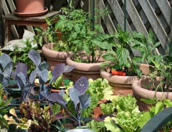ベランダで家庭菜園を楽しむベランダ菜園