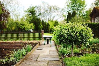 お庭や畑で家庭菜園