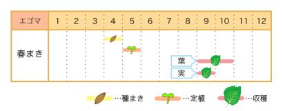 エゴマの栽培カレンダー