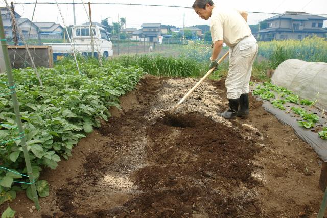 ぼかしと草木灰をまいて、土と混ぜる