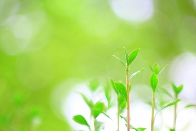 自然にすくすくと生長する植物