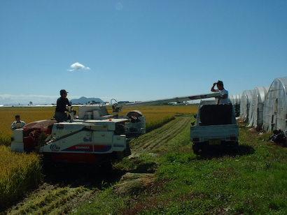 収穫した籾を軽トラックで運ぶ
