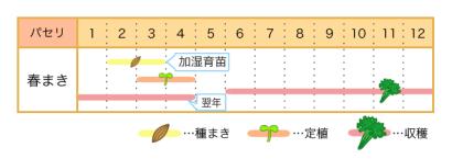 パセリの栽培カレンダー