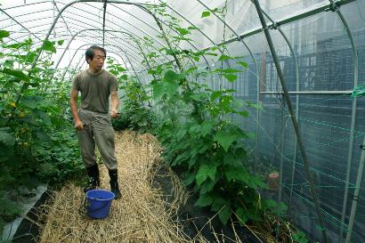 液肥をインゲンの葉面に散布する
