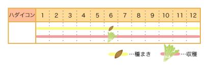 ハダイコンの栽培カレンダー