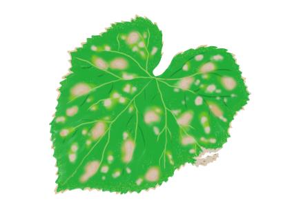 褐斑病におかされたキュウリの葉茎