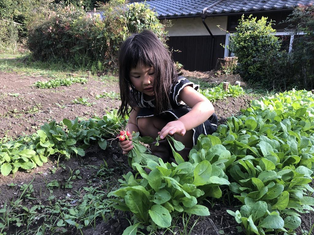 菜っ葉を採る女の子