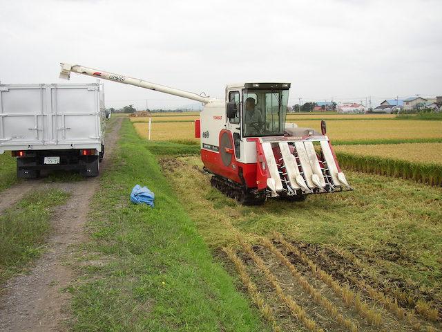 コンバイン収穫