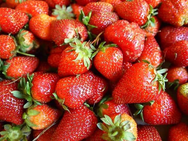 収穫イチゴ
