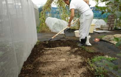 ラッキョウの土にぼかしを加えているところ