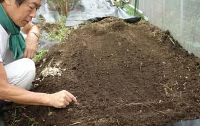 ラッキョウの植え付け
