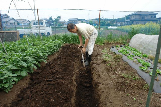 畑に掘った穴に肥料を入れる