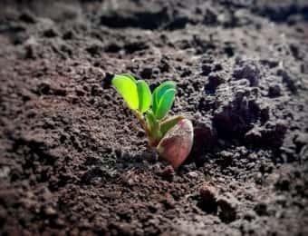 土も中から植物の芽が生える