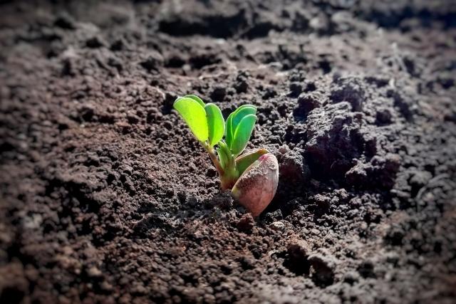 土の中から植物の芽が出る