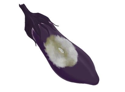 綿疫病におかされたナスの果実