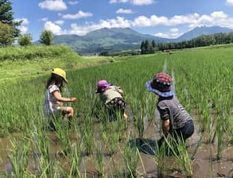 田んぼで遊ぶ子どもたち