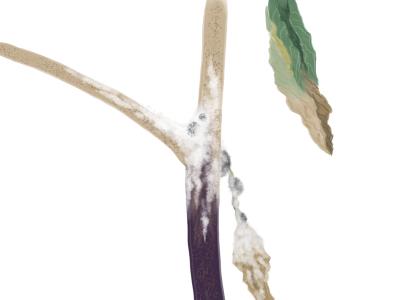 菌核病におかされたナスの茎葉