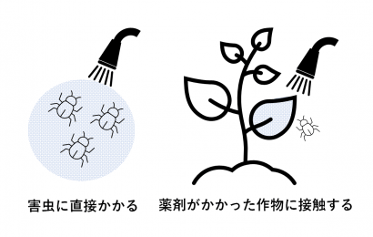 殺虫剤「接触剤」