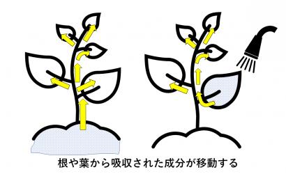 殺虫剤「浸透移行剤」