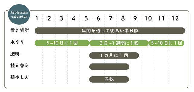 アスプレニウム 栽培カレンダー