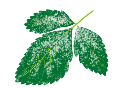 うどんこ病におかされたイチゴの茎葉