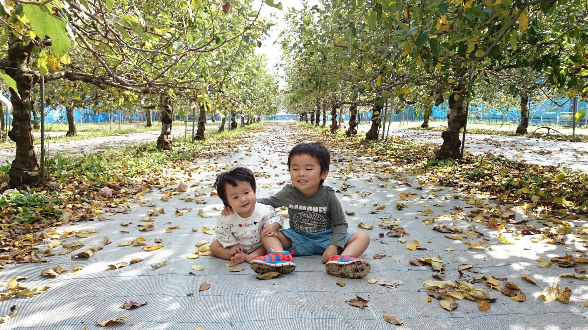 内海果樹園